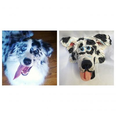 Australian Shepherd Dog Face