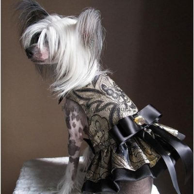 Couture Marjorie Dog Harness Dress