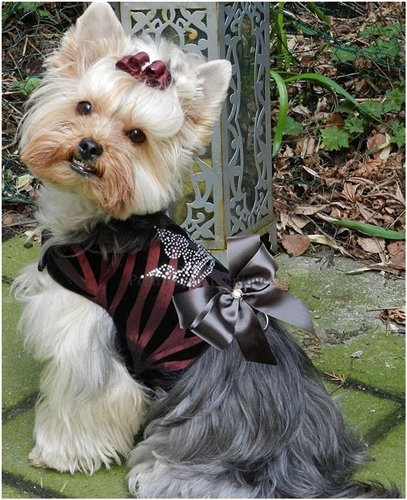 Couture Majestic Crown Dog Harness Vest