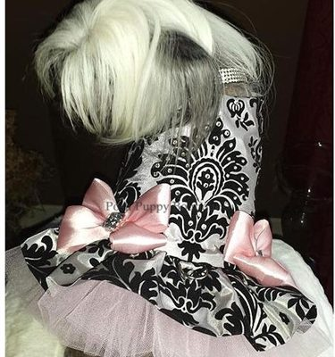 Couture Black Swan Dog Harness Dress
