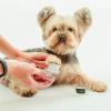 dog paw moisturizer + brush set