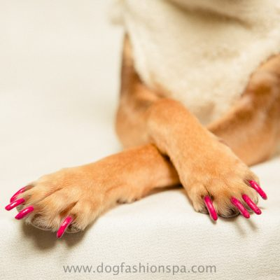 happy paw fuchsia hot pink dog nail polish